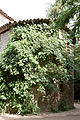 Bambouseraie de Prafrance 20100904 032.jpg