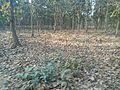 Bangabandhu Sheikh Mujib Safari Park (36).jpg