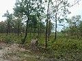 Bangabandhu Sheikh Mujib Safari Park (90).jpg