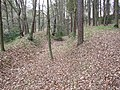 Bank and ditch in Saville Wood, Thurstonland, Yorkshire - geograph.org.uk - 119634.jpg