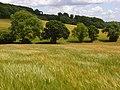 Barley, Stokenchurch - geograph.org.uk - 883742.jpg
