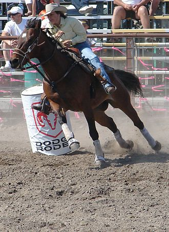 American Quarter Horse - The Quarter Horse is well-suited for the western disciplines.