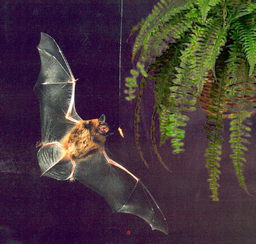 Bat flying at night
