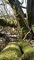 Baumgestrüpp - panoramio.jpg