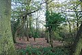 Beacon Hill Woods - geograph.org.uk - 1606036.jpg