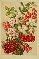 Beautiful flowering trees and shrubs for British and Irish gardens (1903) (20170724388).jpg