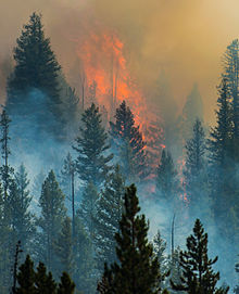 Flames and smoke from the 2013 Beaver Creek Fire in the forest.