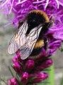 Bee (194105165).jpeg