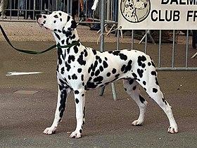 8ac53930fe542b Dalmatien — Wikipédia
