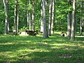 Benches among the trees in the CCC picnic grounds at Jackson-Washington State Forest.jpg