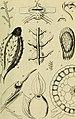 Berichte der Deutschen Botanische Gesellschaft (1884) (19743810634).jpg
