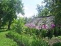 Beryozovka, Bryanskaya oblast', Russia, 242524 - panoramio (9).jpg