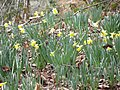 Beside the footpath - March 2012 - panoramio.jpg