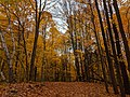 Betty Sutherland Trail - 20191026 - 12.jpg