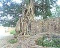 Bhangarh fort Alwar Rajasthan 16.jpg
