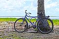 Bicicleta à sombra à beira mar (12407982174).jpg
