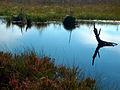 Bielawskie Błota..jpg
