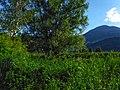 Biotope Lake of Gargazzone - Photo by Giovanni Ussi - Lake and surrounding vegetation (51) 11.jpg