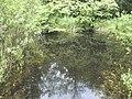 Biotopo Lago Pudro 02.jpg