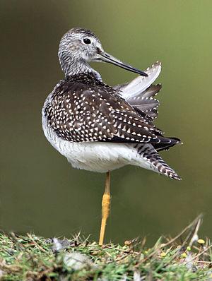 English: A Bird
