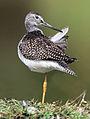 Bird 9334-1c.jpg