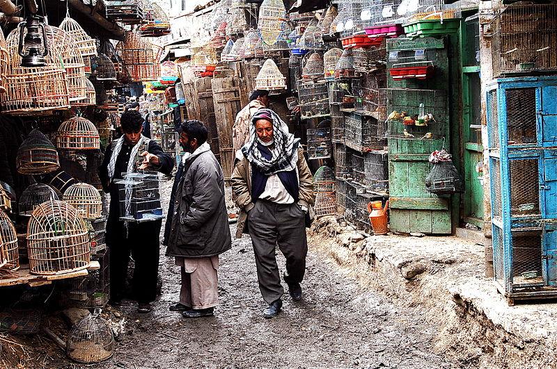 File:Bird Market Kabul.jpg