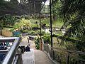 Bird Park in Kuala Lumpur (Malaysia) (43).jpg