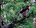 Birds Prešov16Slovakia18.JPG
