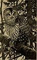 Birds of the New York city region (1923) (20390175891).jpg