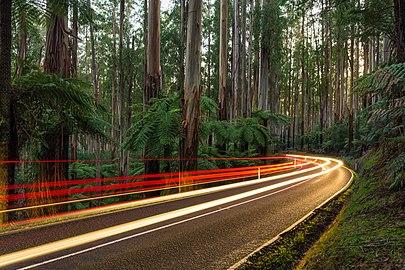 Black Spur, Yarra Ranges NP, Vic, Australia - Diliff.jpg