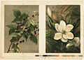 Blackberries and Magnolia Grandiflora (Boston Public Library).jpg