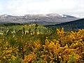 Blackmuir Wood - panoramio (7).jpg