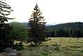 Blochriegelpanorama8, Westen Saualpe, Forstalm.jpg