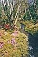Bodnant Garden, North Wales - geograph.org.uk - 881417.jpg