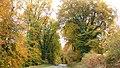 Bois de TREVAREZ.jpg