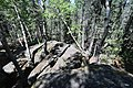 Bonsai Boulders Kananaskis Alberta Canada (26828548892).jpg