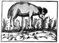 Boramets de Scythie Duret 1605.png