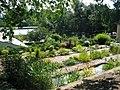 Botanischer Garten Jena - panoramio.jpg