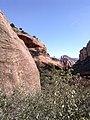 Boynton Canyon Trail, Sedona, Arizona - panoramio (81).jpg