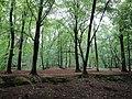 Brasschaat, Belgium - panoramio (2).jpg