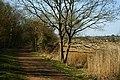 Bridleway Near Yarmouth, Isle of Wight - geograph.org.uk - 1804915.jpg
