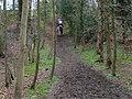 Bridleway in Bottom Wood - geograph.org.uk - 150463.jpg