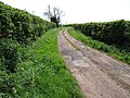 Bridleway to Hook St - geograph.org.uk - 412466.jpg