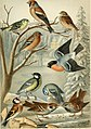 Brockhaus' Konversations-Lexikon (1892) (14597958030).jpg