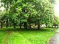 Brody, Lviv Oblast, Ukraine - panoramio (278).jpg