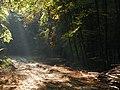 Bukowina 2 - panoramio.jpg