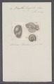Bulla fragilis - - Print - Iconographia Zoologica - Special Collections University of Amsterdam - UBAINV0274 091 07 0018.tif