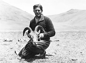 Argali - Edmund Geer during the 1938–1939 German expedition to Tibet