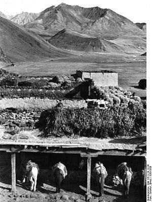 Ralung Monastery - Horse stable. Ralung. 1938.