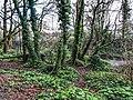 Bushy Park, Dublin -146462 (45754722174).jpg